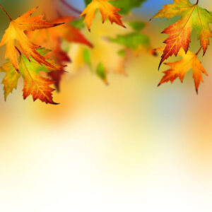 Autumn Leaves Backgrounds For Powerpoint – Flower Ppt Templates inside Free Fall Powerpoint Templates
