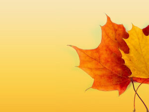 Autumn Ppt Background – Powerpoint Backgrounds For Free for Free Fall Powerpoint Templates