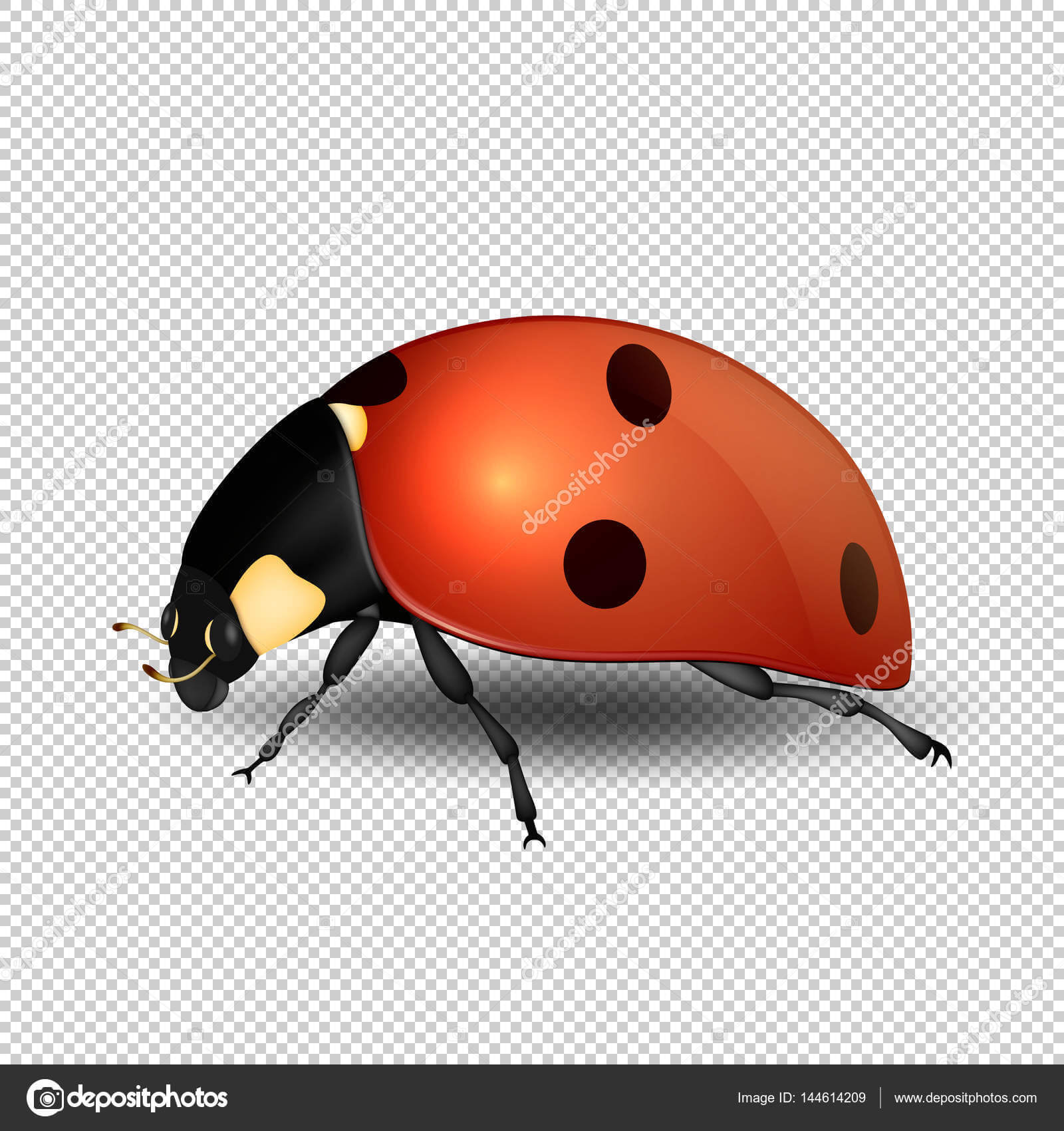 Blank Ladybug Template | Vector Close Up Realistic Ladybug For Blank Ladybug Template
