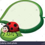 Border Template With Ladybug On Leaf Illustration Stock With Blank Ladybug Template
