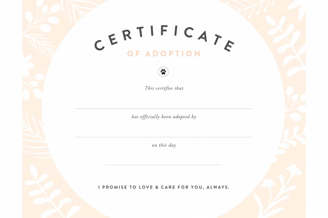 Pretty Fluffy Within Toy Adoption Certificate Template
